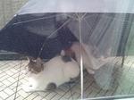 傘、大活躍♪